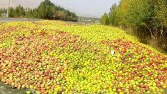 فعالیت ۴۰ مرکز بهداشتی دپوی سیب زیر درختی در استان
