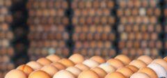 تخممرغ از قافله گرانی عقب نماند/ همیشه پای دلالان در میان است