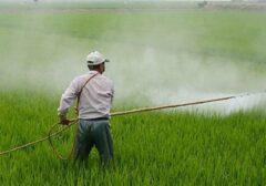 توزیع بیش از ۱۰۰۰ تن انواع سموم کشاورزی در استان