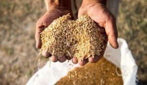 بیش از 10 هزار کیلوگرم گندم قاچاق در خوی کشف شد