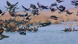 شکار هرگونه از پرندگان مهاجر و وحشی ممنوع است