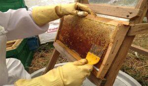 رشد 10 درصدی تولید عسل در خوی