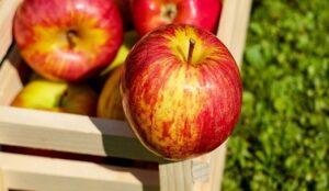عرضه سیب درختی در بورس کالا