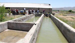 رهاسازی بیش از ۱۰۰ هزار بچه ماهی در استخرهای ذخیره آب کشاورزی استان