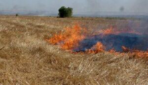 ۲۵ هکتار از اراضی زیر کشت گندم در مهاباد طعمه حریق شد