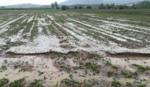 خسارت 5 هزار میلیارد ریالی حوادث غیر مترقبه به محصولات کشاورزی استان