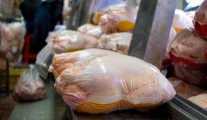 تا روز شنبه کمبود مرغ زنده در استان برطرف می شود