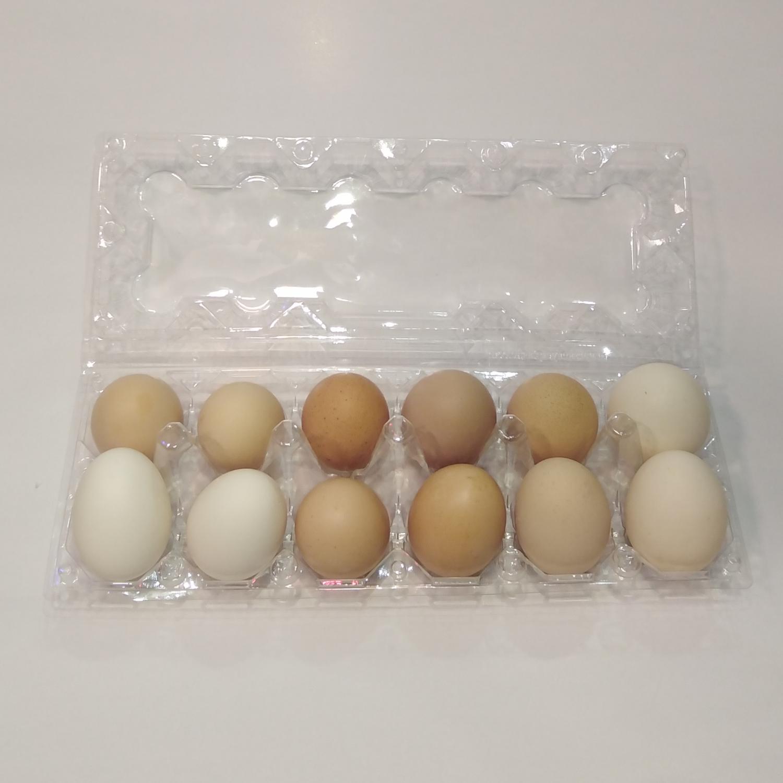 عرضه تخم مرغ فلهای از ابتدای بهمن ممنوع است