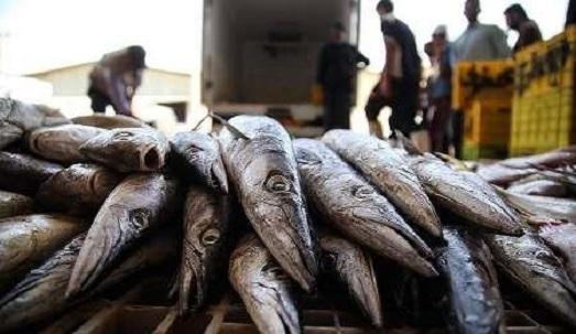 کرونا صادرات آبزیان از پایانههای مرزی آذربایجانغربی را کاهش داد