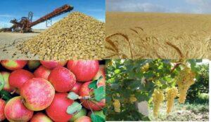 بیش از 6 میلیون تن محصولات کشاورزی سالانه در استان تولید می شود