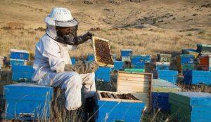 صدور شناسنامه هویتی ویژه زنبورداری