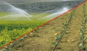 برنامه مشارکت کشاورزان در احیای دریاچه ارومیه اجرایی می شود
