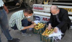 بازدید از روند صادرات سیب درختی از گمرک شهرستان ارومیه + فیلم